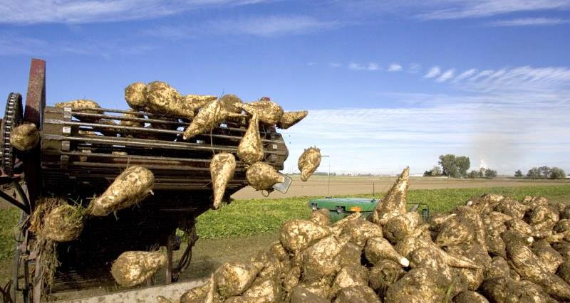 NFU Sugar takes action as M and J Haulage Ltd goes into administration