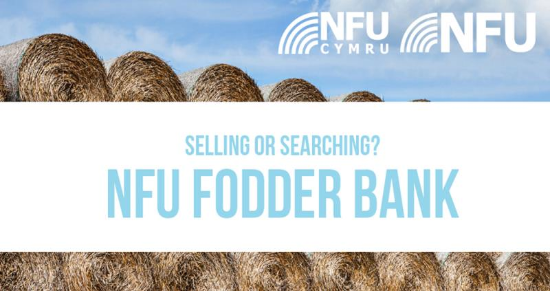 Fodder Bank_53091