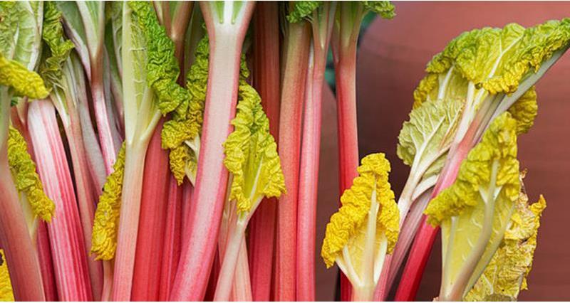 Rhubarb_39860