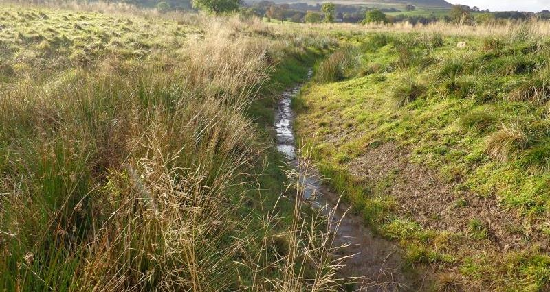 cleaned ditch_38443