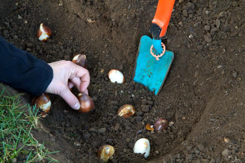 October gardening with Pippa Greenwood