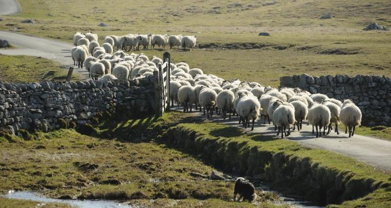Free minor variation to your sheep dip or pesticide landspreading permit before 28 September 2018