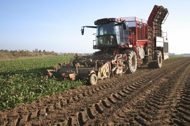 Sugar beet harvest_7824