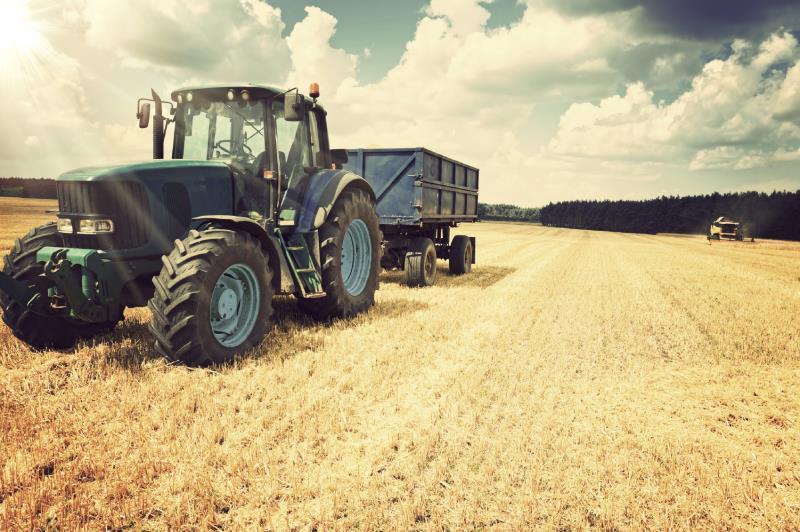 harvesting wheat_7676