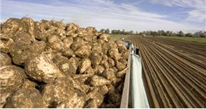 EU levy refund secured for British beet sugar industry