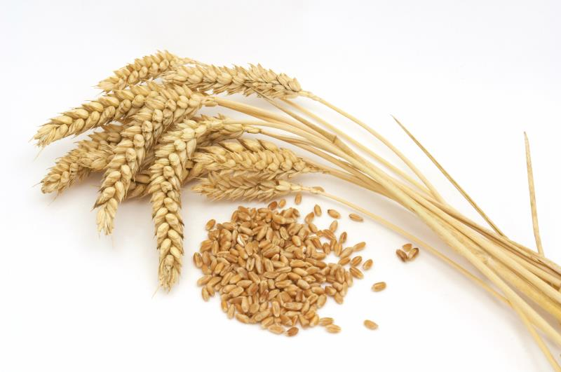 Wheat ears and grains_18546