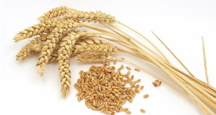Prospects for UK Cereals seminar to be held in London