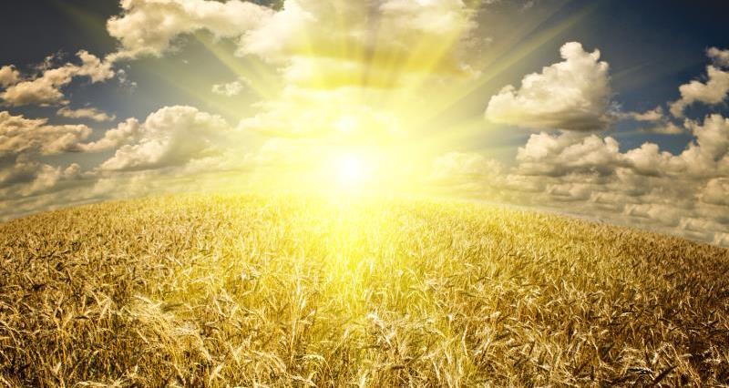 Sunrise over wheat_17009