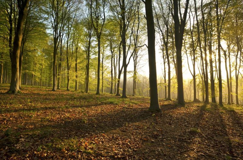 Dorset woodland_7517