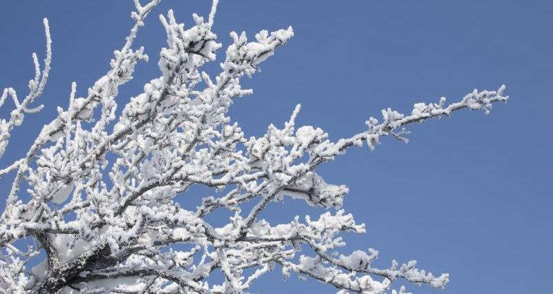 Rime frost on tree_13227