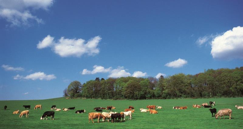 UK-Australia trade deal explained: What it means for British farming