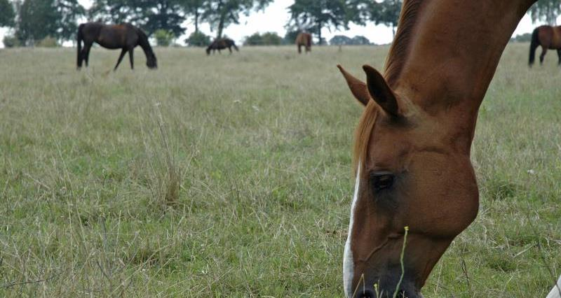 Equine influenza outbreak: spotting the signs