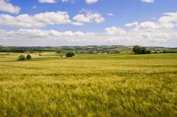 Wheat fields_19977