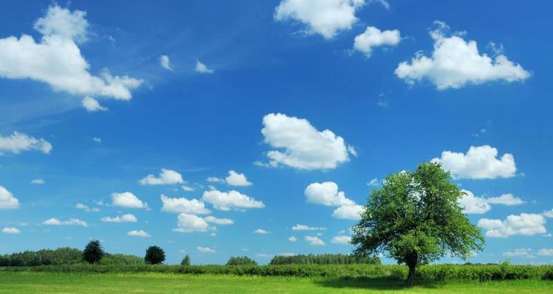 Tree in field_7577