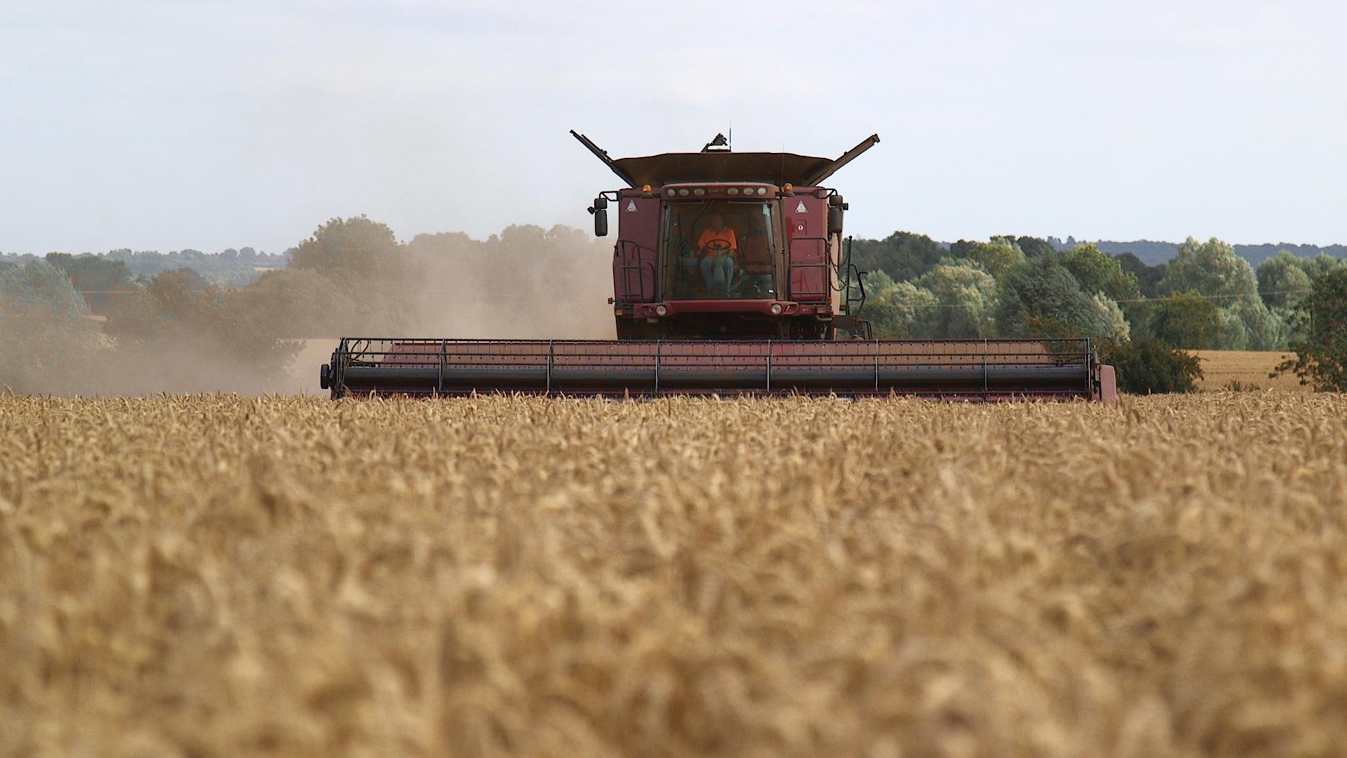 Wheat Harvest _37080