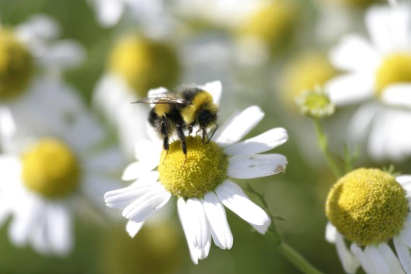 Boost Your Bees_24158