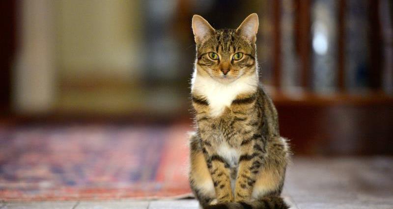 Ivar Mountbatten - cat_28876