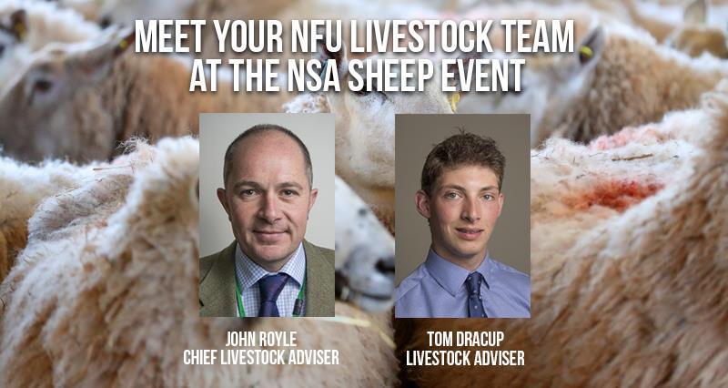 NSA Sheep banner_55140