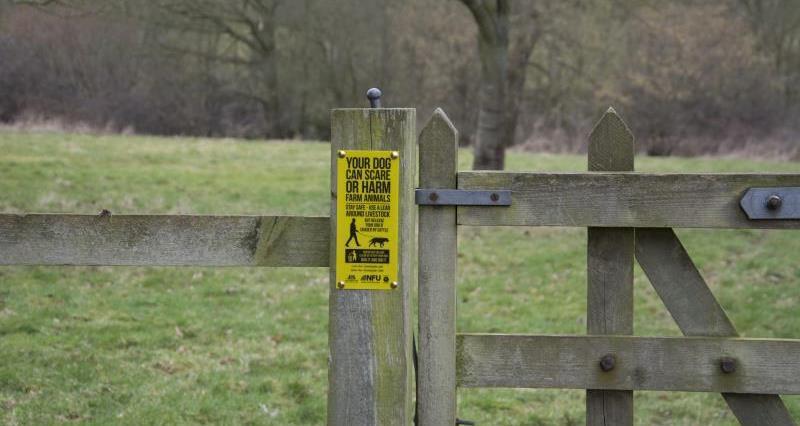 Dog Walking Sign_27369