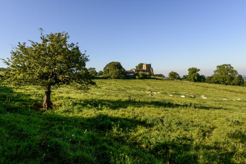Farming landscape livestock sheep_47852