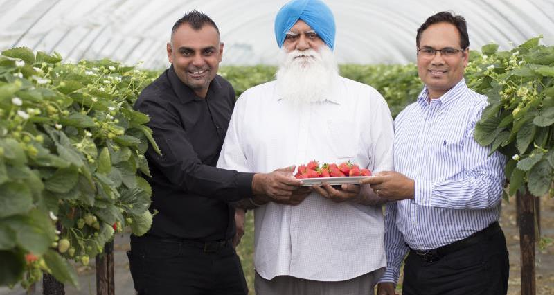 Meet the strawberry grower