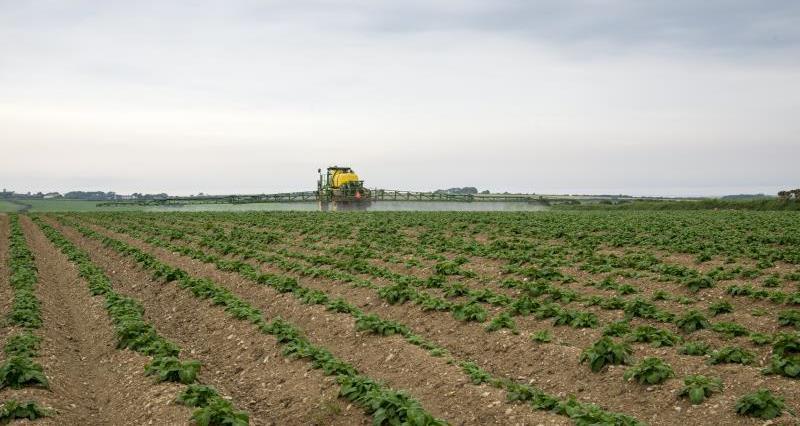 Sprayer potato crop_35766