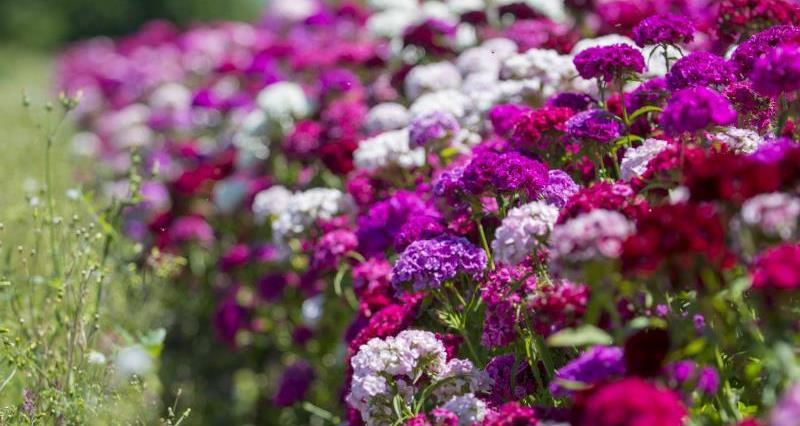 The flower farmers' favourites