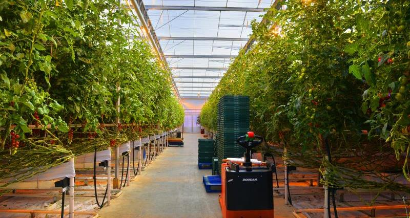 Roly Holt 2015 LED Lighting tomatoes_47140