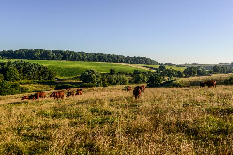 Farming landscape cattle_47807