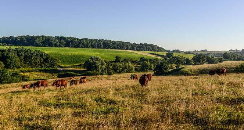 NFU responds to plans for new statutory body for environmental standards