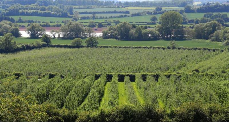 Farmland Herefordshire_44289