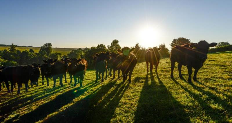 Farming landscape cattle_47801