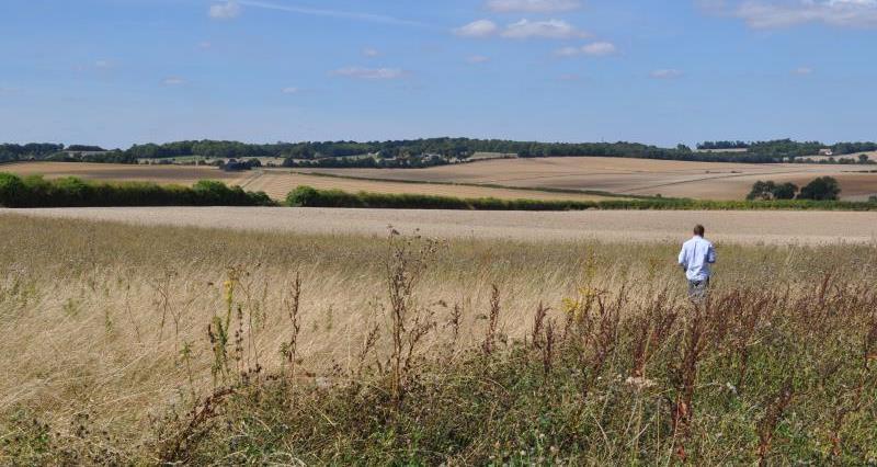 CFE Conservation headland Royston 2016_49377