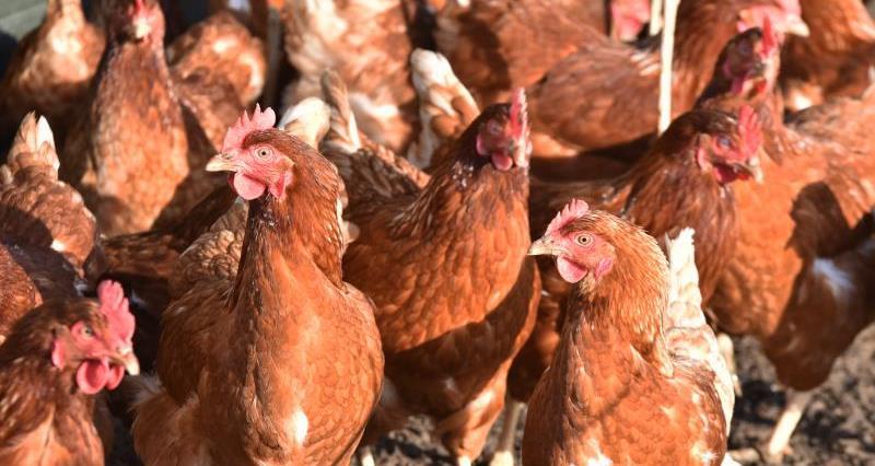 Preventing bird flu