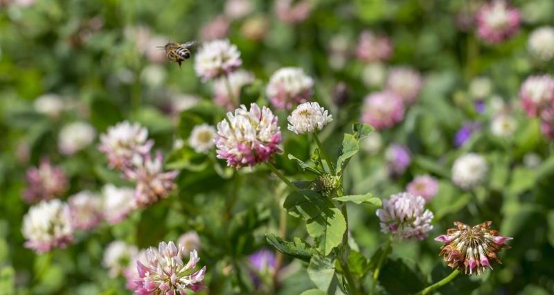 Bee on wildflowers_55646