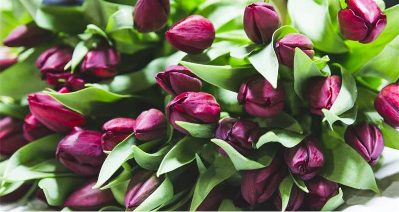 Meet the tulip grower