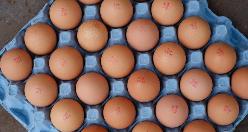 Good news for free range egg producers