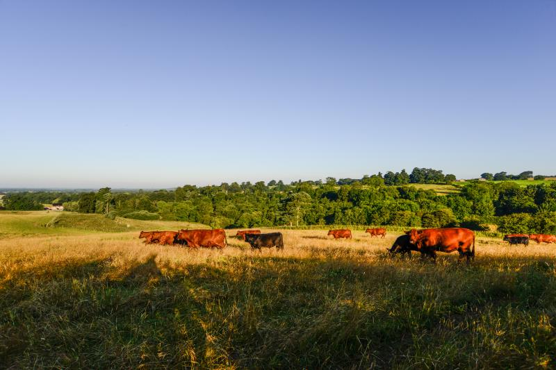 Farming landscape cattle_47814