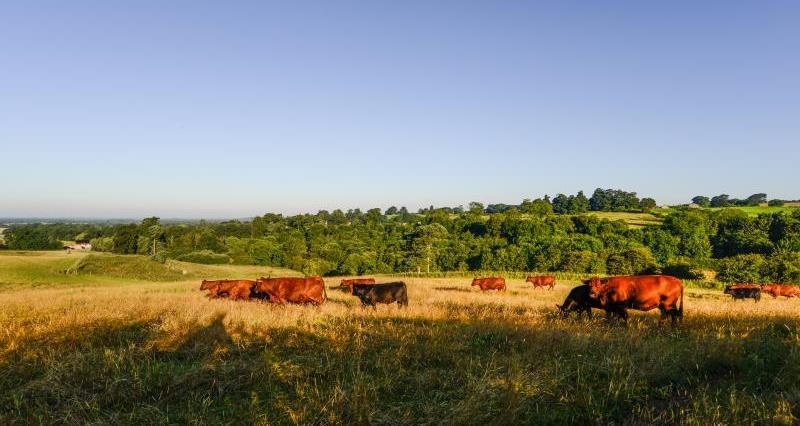 Farming landscape cattle_47814