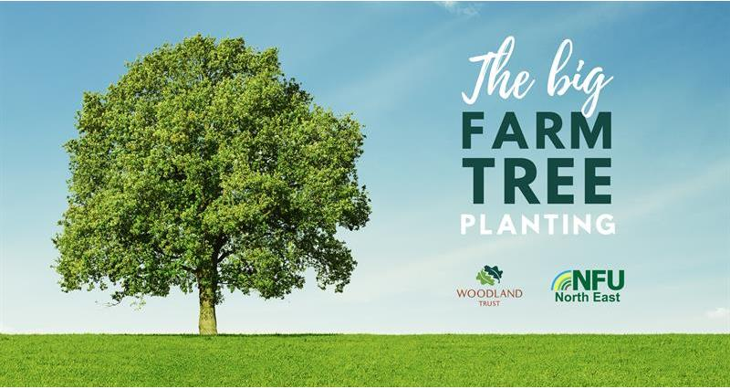 Support the Big Farm Tree Planting