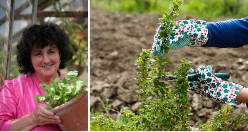 Pippa Greenwood - pruning_58467