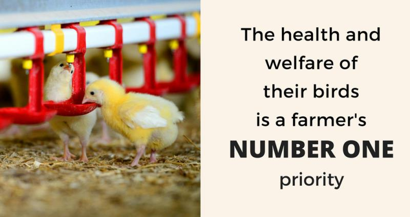 chicken - health and welfare quote_50548