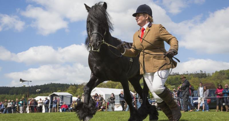 Show fell pony_54504