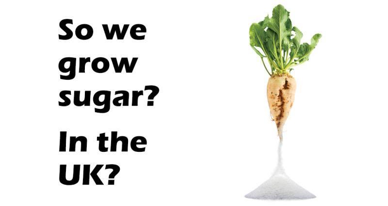 So we grow sugar...in the UK?_50646