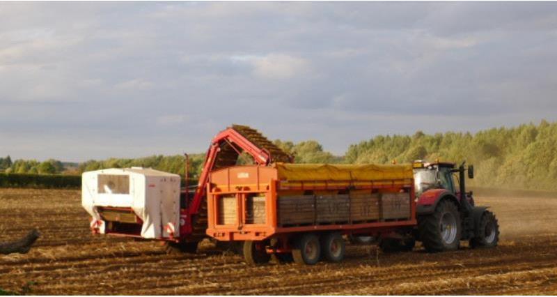 potato harvest _57569