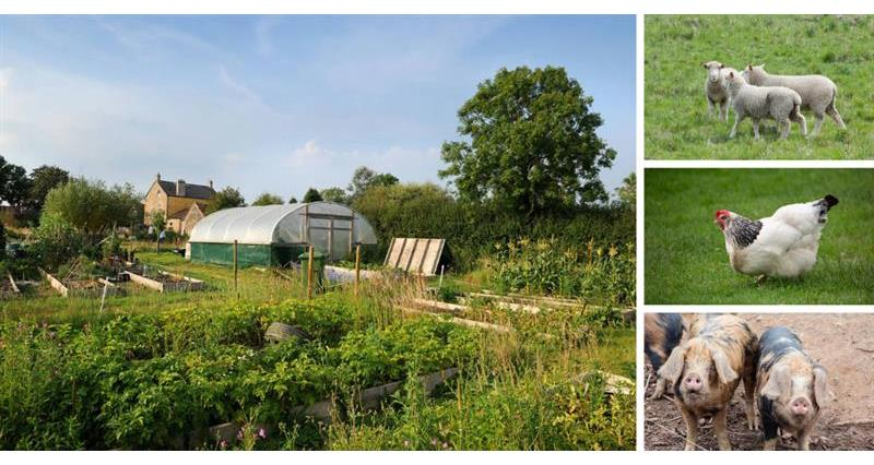 Best stock and crops for your smallholding