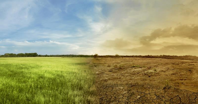 dry weather field comparison - web crop_55960