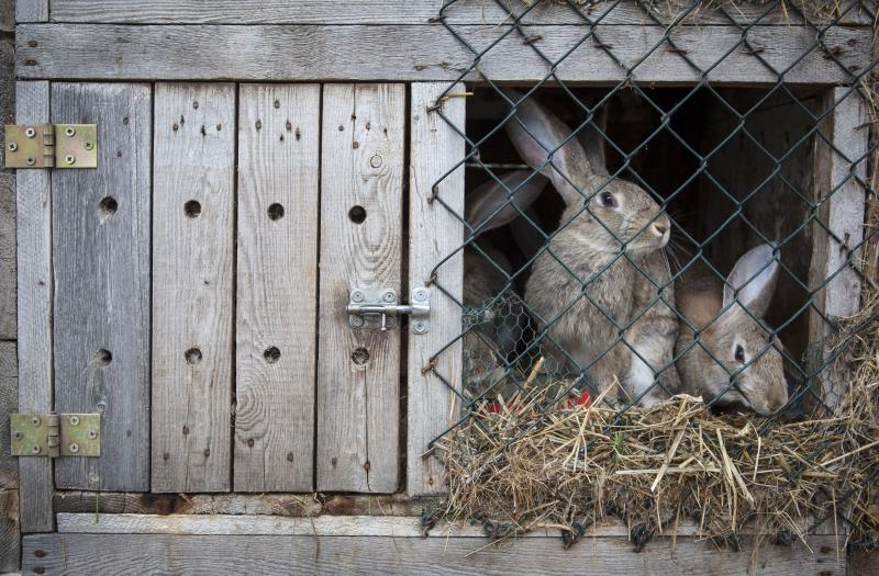 rabbit in a hutch_55397