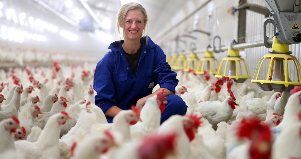 Meet the chicken farmer