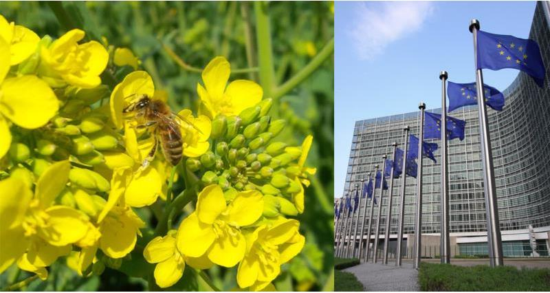 neonicotinoids and european commission_49641